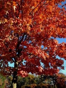 ISL_autumn_2013